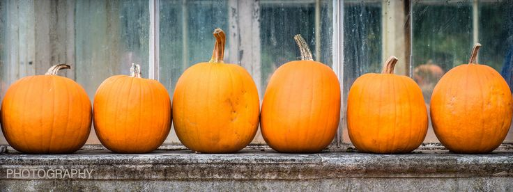 Five little pumpkins sitting on a fence...