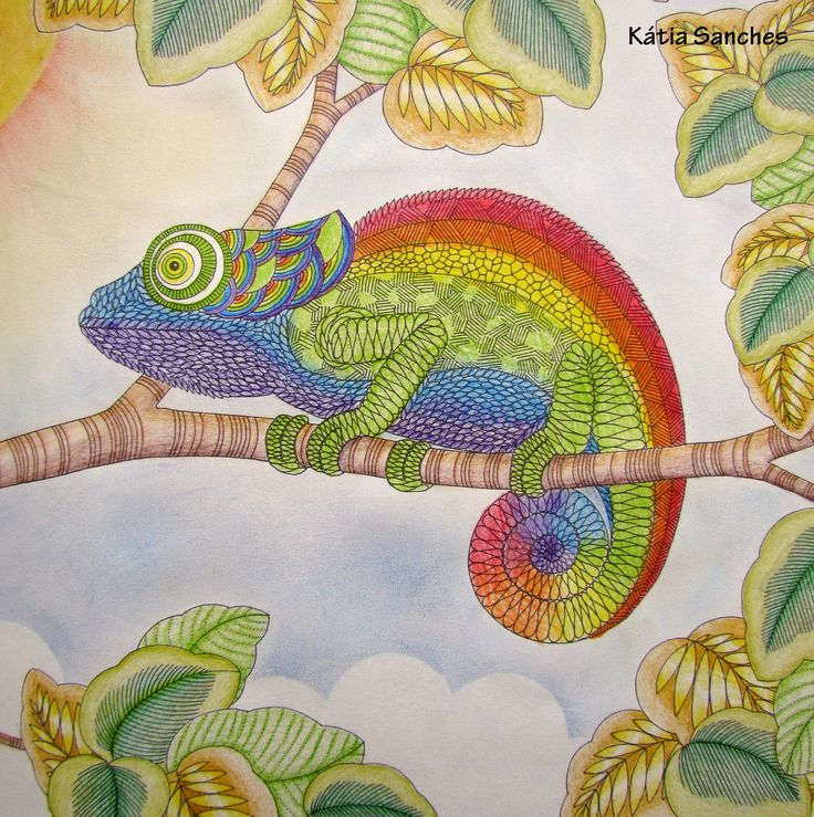 20 Best Animal Kingdom Chameleon Images On Pinterest