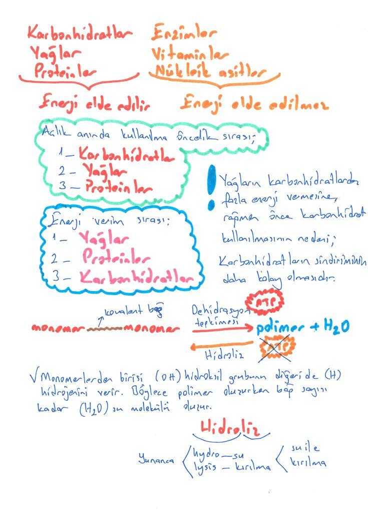 Organik Moleküller-2 www.sanalbiyoloji.com