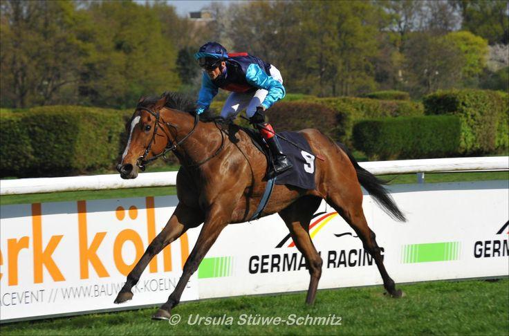 Queenie (GER) 2010 B.m. (Areion (GER)-Quintana (GER) by Fantastic Light (USA) 1st Grosser Preis der Landeshauptstadt Düsseldorf (GER-G3,1700mT,Düsseldorf) (poto: Ursula Stüwe Schmitz)