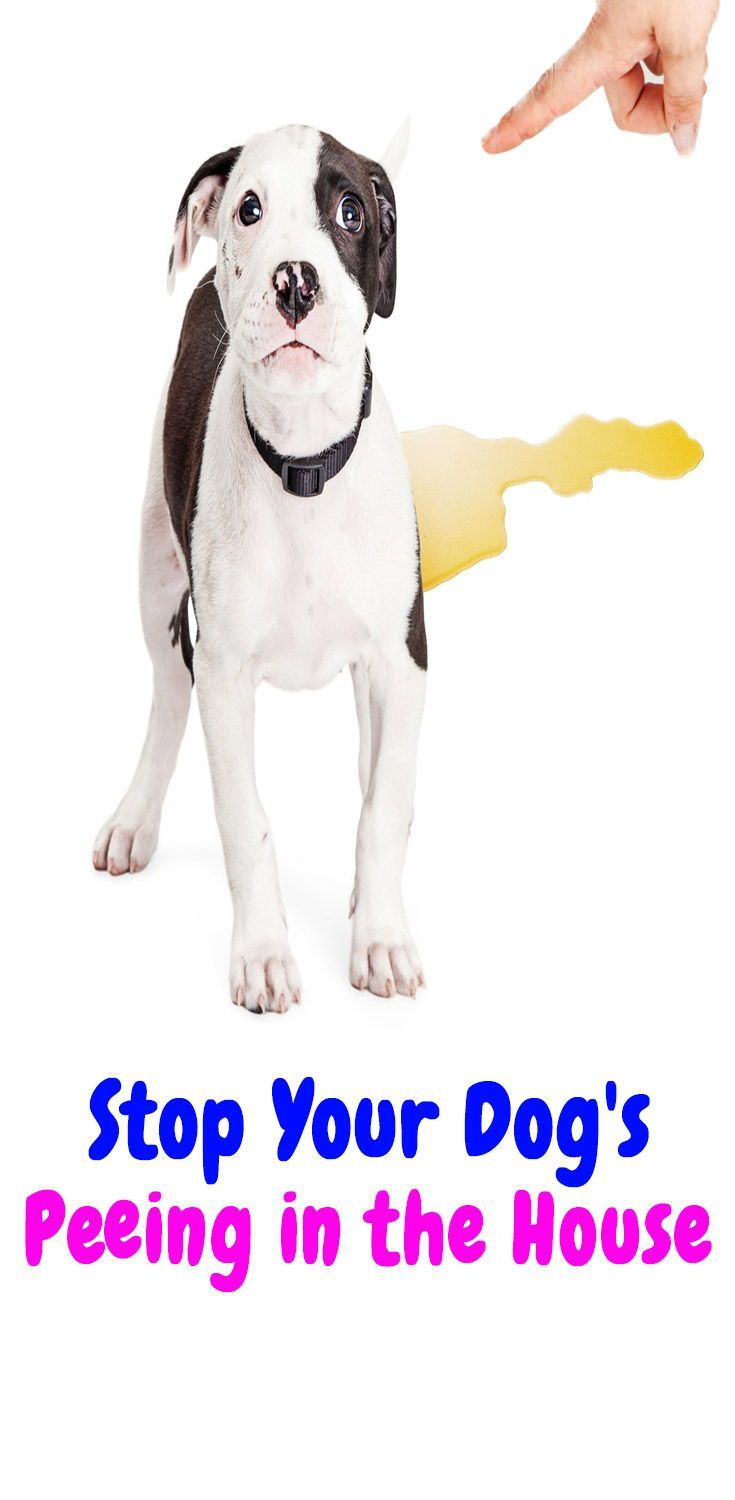 Simple Ways To Stop Your Dog From Peeing In The House How To
