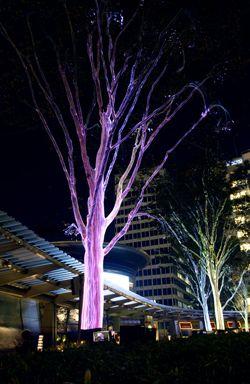 Ribbon fiber optic lighting. & 175 best lighting images on Pinterest | Gardens Outdoor lighting ... azcodes.com