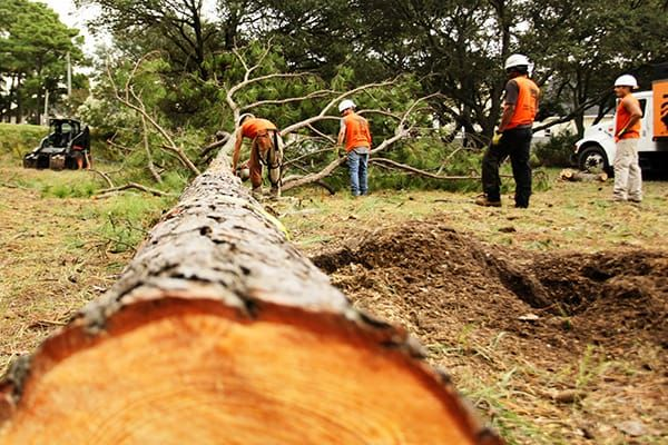 Obtaining A Tree Removed Or Trimmed May Improve The Overall Appearance Of Your Landscape And Stop The Labor And Cost Involved With Cleaning The Area Repeatedly.  It Is Never Wise To Remove A Tree By Yourself Unless It. For Choosing the Right Tree Removal Service Visit On The Below Link.  #treeremoval