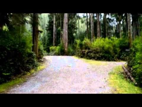 A walk through of Cougar Creek Campground on Central Vancouver Island. A salmon anglers paradise!