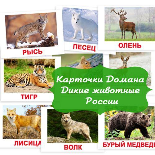 Дикие животные России картинки для детей, карточки по методике Домана