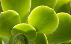 kamerplanten en hun werking/zuivering van de lucht.