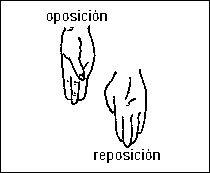 REPOSICIÓN. Movimiento que realiza el pulgar que da  de la oposición hasta su posición anatómica (regresa).