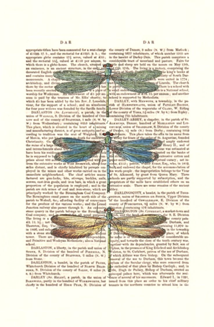 Dragonflies Wall Decor 17 Best Images About Dragonfly Illustrations On Pinterest Table