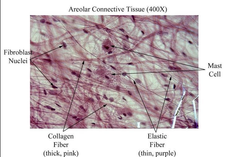 bio 201 muscle tissue essay A level biology a h420/01 biological processes   the walls of arteries contain a lot of muscle fibres to contract and  using chopped liver tissue and.