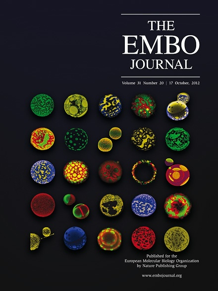 October 2012 - The EMBO Journal     Giant proteo-liposomes of pulmonary surfactant, material that lines the alveoli of mammals and allows breathing. Each vesicle is 20-50µm in diameter and contains fluorescent dyes highlighting the preferred localization and packing properties of the surfactant lipids and proteins in the membrane. (Credit: Jorge Bernardino de la Serna, EMBOJ) #NPG Nature Publishing Group
