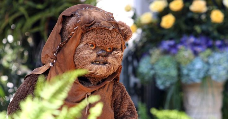 """Cómo hacer un disfraz de un Ewok de Star Wars. Los Ewoks son las criaturas lindas y peludas que hicieron su primera aparición en """"Star Wars VI: El Retorno del Jedi"""". En la película, éstos eran valientes combatientes a pesar de su apariencia adorable. Hacer un traje de un Ewok es perfecto para los niños en Halloween u otras ocasiones especiales. Lo puedes crear con bastante simplicidad usando ..."""