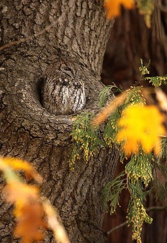 camouflaged...no wonder I've never seen one!