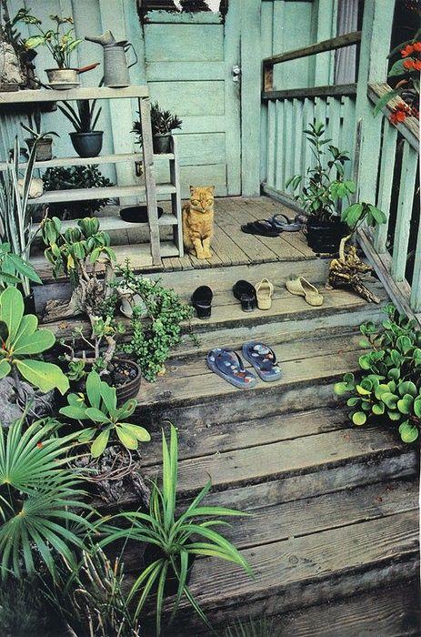 flip flops & succulents: Country Porches, Orange Cat, Porches Plants, Succulents Can, Gingers Cat, Back Porches, Front Porches, Beaches Cottages, Front Step