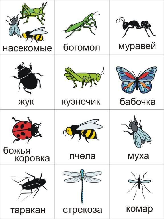 Насекомые - Insects