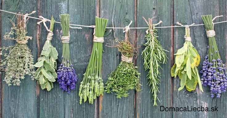 Zaberie vám vždy veľa času vyhľadať si aká bylinka sa hodí na liečbu akého ochorenia? V tomto článku nájdete všetky informácie pekne pokope.
