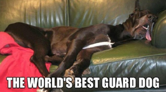 The best great dane memes ever.
