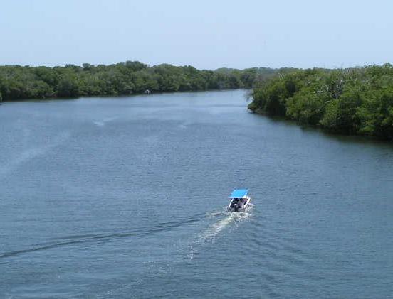 Parque Nacional Laguna de la Restinga, Isla Margarita. Venezuela