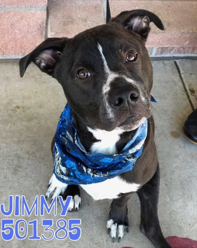 Jimmy Located In San Antonio Tx Has 1 Day Left To Live Adopt Him