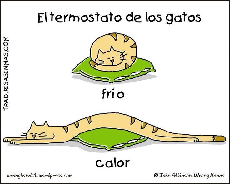 El termostato de los gatos