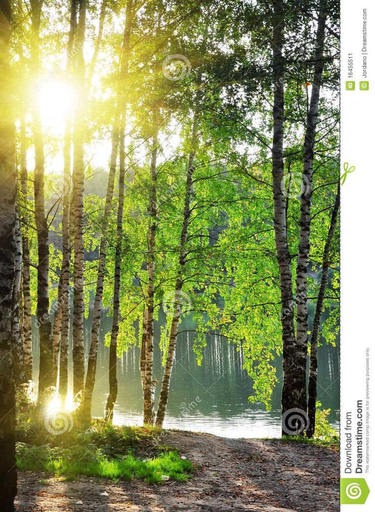 trees summer alaska - photo #24