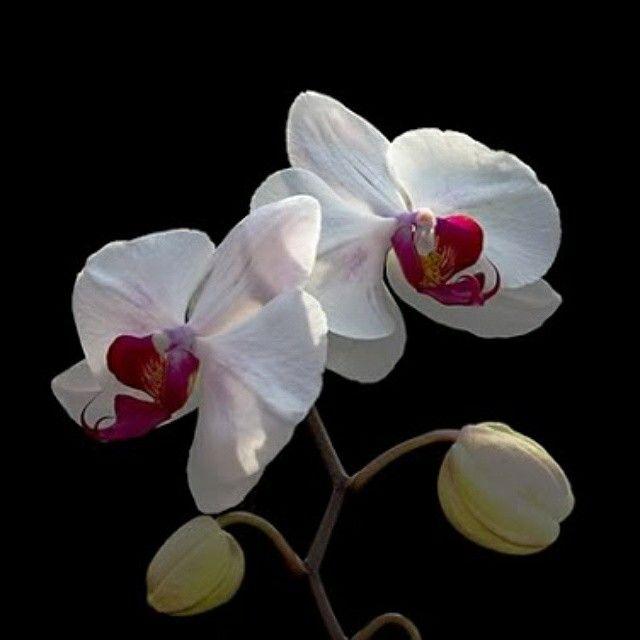 Una flor cada día....