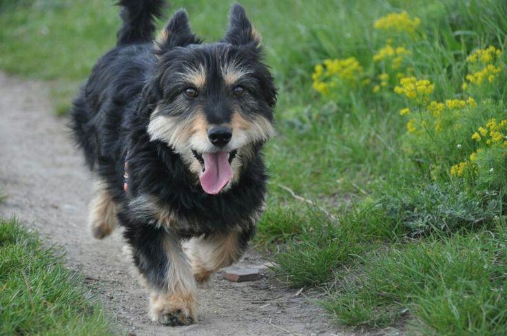 Wieści z nowych domów- Czaruś adoptowany na pocz. tego roku ;-) #psy #dogs #adopcje #adopt #polska #poland #pomoc #help #schronisko #shelter
