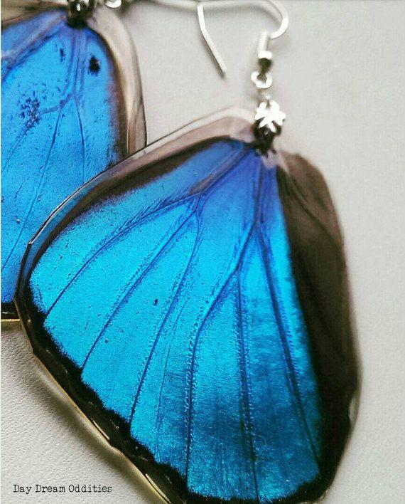 Menelaus Blue Morpho Morpho menelaus Butterfly by DayDreamOddities