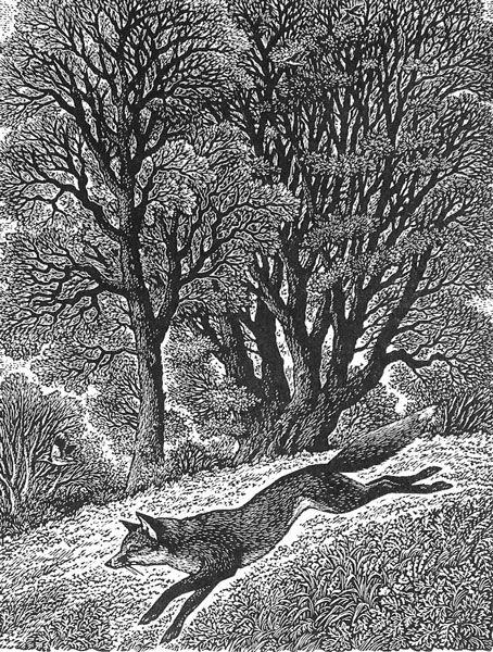 Wood engraving artist Sue Scullard