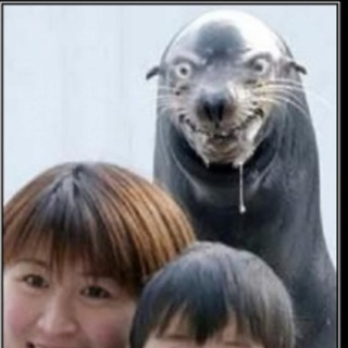 Bahahha! I saw this and thought of your face:): Photobomb, Seals, Sea Lion, Funny Stuff, Humor, Animal