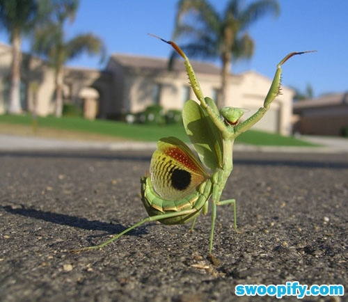 Tahhh-Daahhh!Photos, Happy Dance, Bugs, Kung Fu, Funny, Praise The Lords, Insects, Praying Mantis, Animal