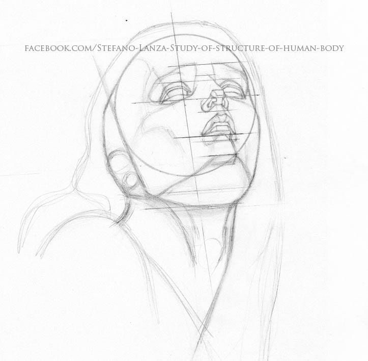 https://www.facebook.com/Stefano-Lanza-Study-of-structure-of-human-body-1479159998770051/?ref=bookmarks #head #art #pencil #anatomy #draw #drawing #matita #disegno