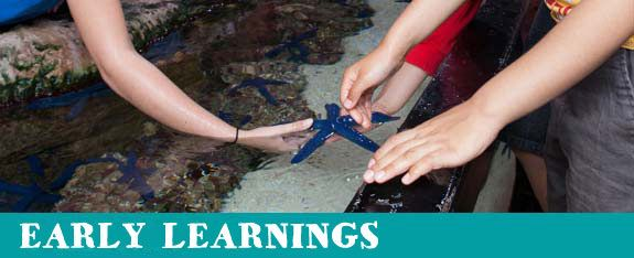 Early Childhood   Schools   SEA LIFE Melbourne Aquarium