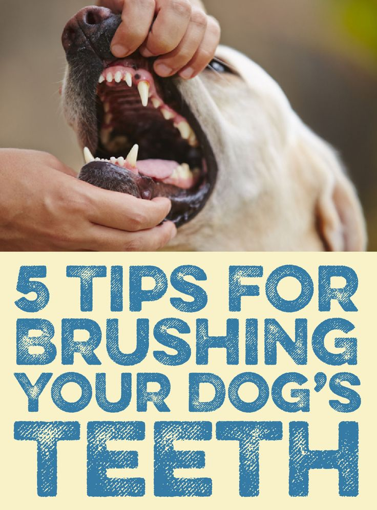 5 Tips for Brushing Your Dog's Teeth!