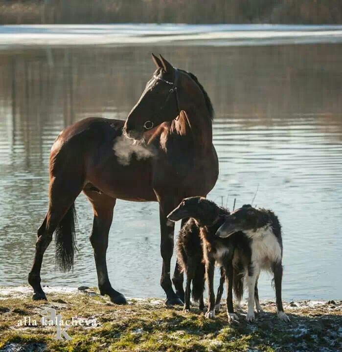 картинки борзая лошадь начать делится своими