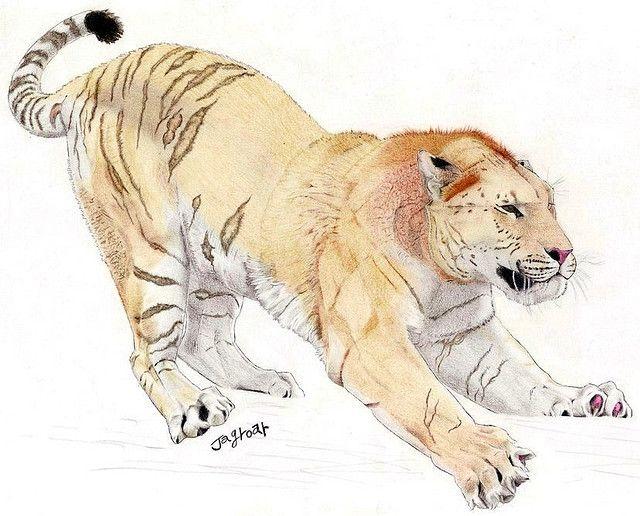 Felinos Tigre acuarela