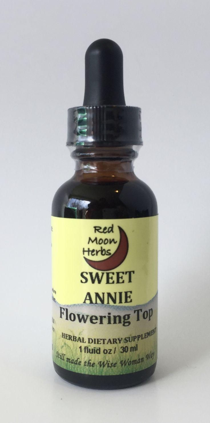 Sweet Annie (Artemisia annua)