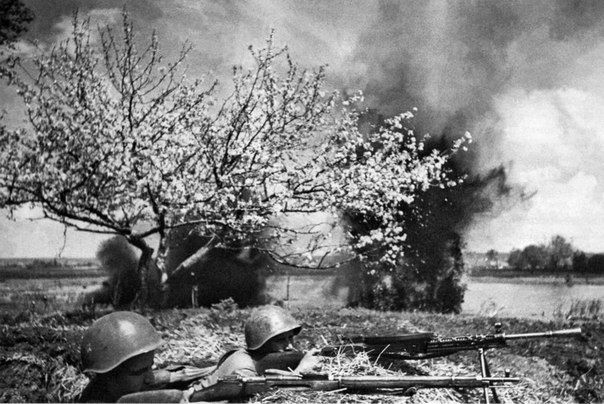 Photographer Anatoly Garanin. War and tree blossoms
