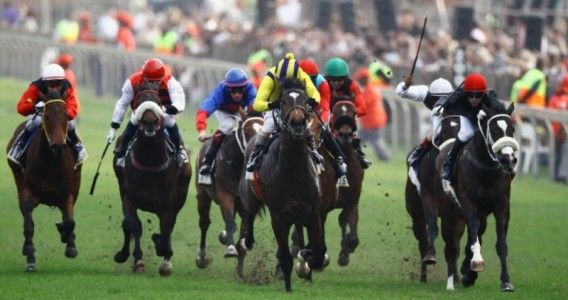 Essential tips for becoming a horse racing jockey