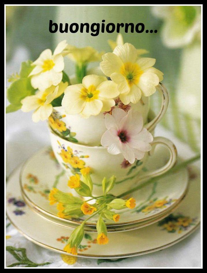 buongiorno a fiori chic