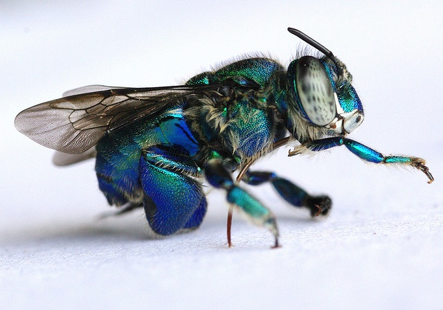 how to get rid of sawflies