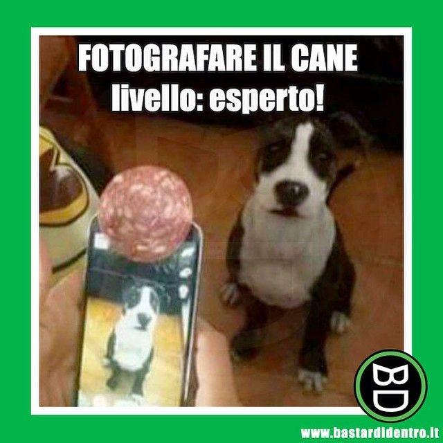 La fetta di #salame la meriterebbe il padrone come premio per l'inventiva! #cane #foto www.bastardidentro.it