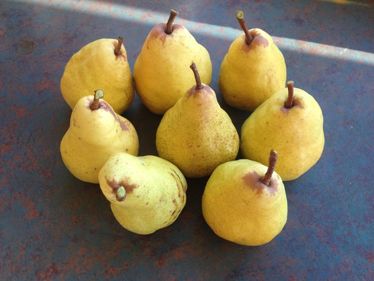 pears from two year old tree