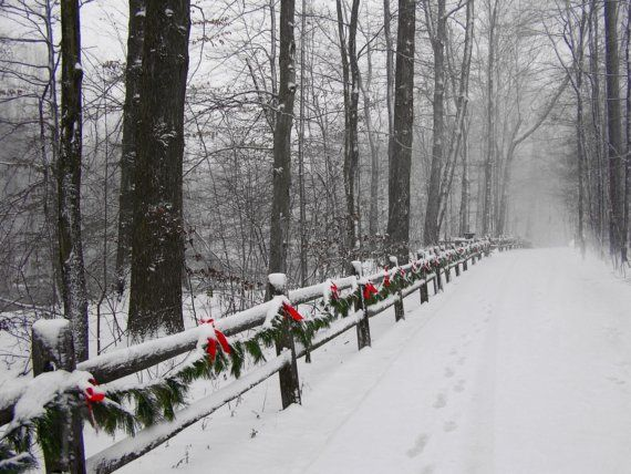 Winter Snow Scene Photograph 4x6 Deck the Trail Print Christmas Photo. $7.00, via Etsy.