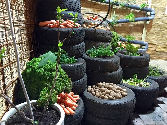 17 Best images about Odla/Trädgård on Pinterest | Gardens ...
