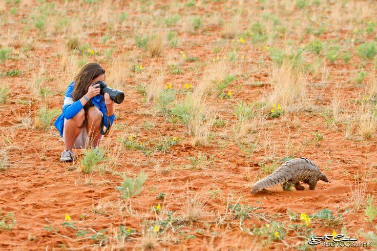 Kalahari's Scally Ant Eater, read Untamed Odyssey's latest blog, enjoy!
