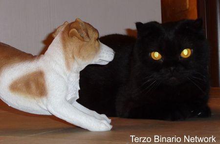 BUSSANA, SANREMO: SMARRITO MERLINO, GATTO NERO. RICOMPENSA http://www.terzobinarionetwork.com/2015/11/bussana-sanremo-smarrito-merlino-gatto.html