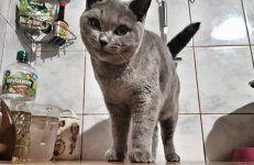 Jesteśmy domową kameralną hodowlą kotów rasy brytyjski krótkowłosy i ragdol w miejscowości Oczko koło Częstochowy. Nasza hodowla jest zarejestrowana w Śląskim Klubie Miłośników Kotów Rasowych należącym do Międzynarodowej Federacji Felinologicznej FIF-a.