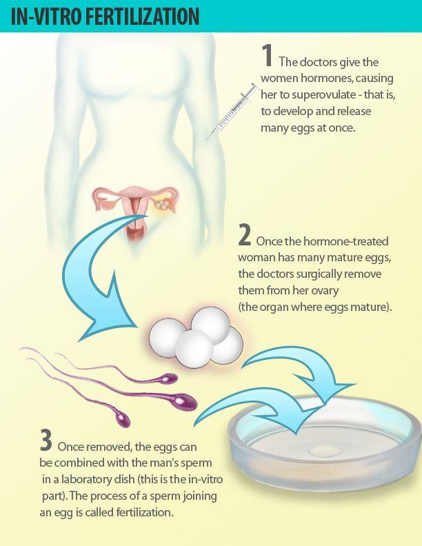How many eggs will clomid make