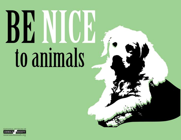Animal rights communitys plight for the welfare of animals