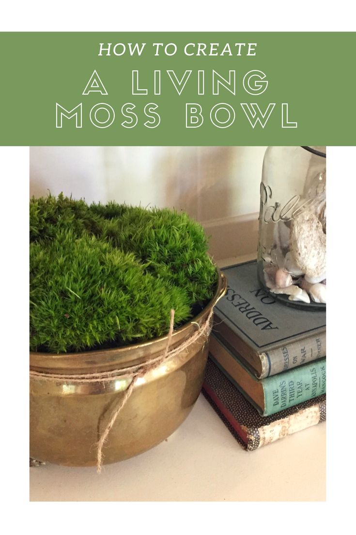 How To Create A Living Moss Bowl Green Living Room Decor Moss Moss Decor